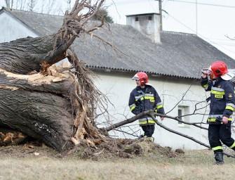 Drzewo zwaliło się na dom – ZDJĘCIA