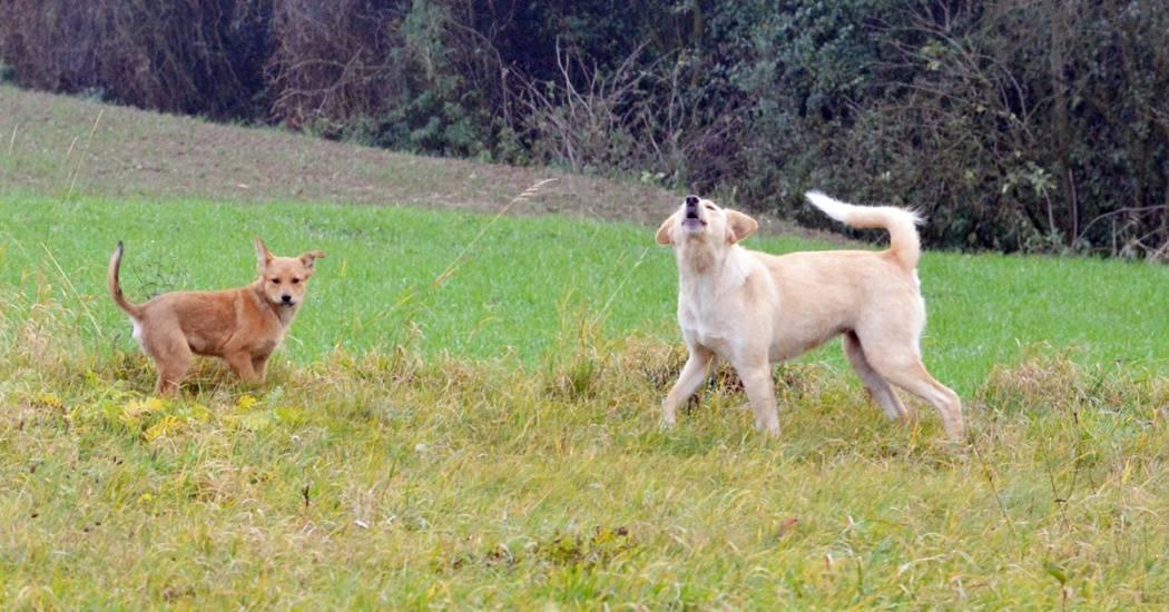 psy zagorzyce