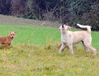 Psy terroryzują Zagorzyce, a służby rozkładają ręce