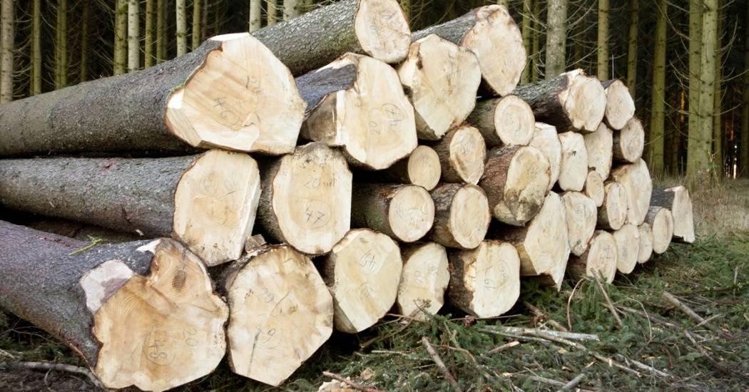 tree-rock-wood-grain-trunk-log-1089486-pxhere.com